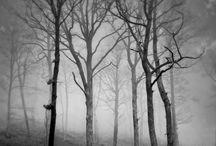Black and white ✝✝✝ / by Fabiola Urdiain