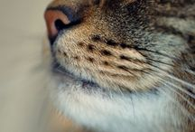our relatives  -  cats / by Helen Karetnikova