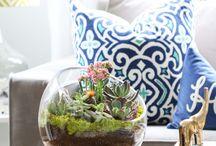 plants! / by Lindsay Kirkland