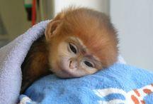 Cute animal stuff / by Kim Haines