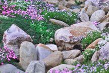 Kamen u vrtu / Rascvijetani kamenjar / by Mira Split