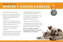 Pet Safety & Tips / California Veterinary Medical Association, Sacramento, CA. Pursuing excellence in the veterinary profession. Contact the CVMA @ 916.649.0599 | staff@cvma.net | www.cvma.net. / by CVMA