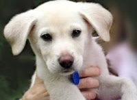 Dogs - It's All About the Dog! / Adopt First! We are proudly rescued by the world's best pup. ♥ / by The Decorated House ♛ Donna