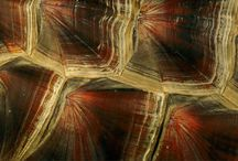 Surfaces / by Bruna Grossi