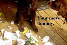 doggies / by Jenny Cox