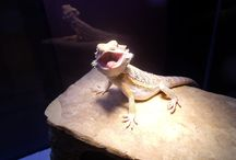 Reptiles / and the occasional amphibian / by Adria