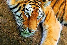 Animal pics / by Becky Gillis