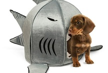 Animals need homes too! / by Rightmove.co.uk