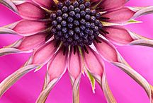 Its Pink Right? / Cause it's just prettier in pink ( a shade of GA red) / by Angela Franklin