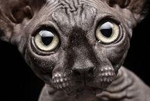 Animals  / by Toni Barker
