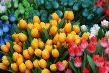 Flowers / by Saumya Dahake