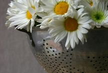 Daisies & Sunflowers / by Lucy Waggoner
