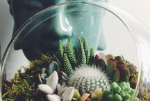 Plants and planters / Terrariums too! / by Helen Hass