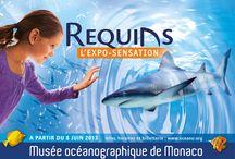 Requins : L'expo-Sensation / by Musée océanographique Monaco - Aquarium