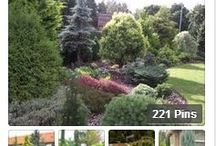Garden Trees, Shrubs / Trees, Shrubs, Bushes, Flowering & Evergreen information  / by Christine Sinclair