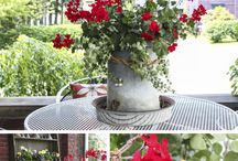 Home Decor & Craft Projects / by Cindy Frost Lacey-Becker