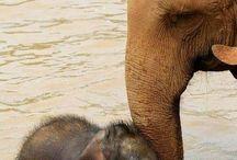 Elephants  / by Renee Hoskins 'Duarte'