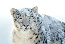 Cats >^.^< WILD! / by Debbie Beals
