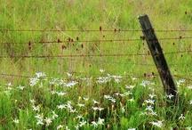 fence & gate / by ZC Macphearson