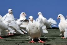 Bird Spikes / by Bird B Gone, Inc.