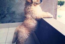 Puppy Galore / by Lakisha Ferguson