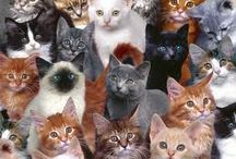 [cute] - Pets :: Animal Welfare / Animal Welfare Sites in the UK / by Nevada Tan