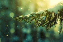 Winter / by Jane Niday