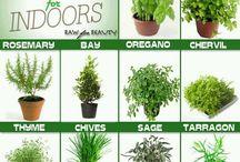 Garden Ideas / Ideas for making a successful indoor herb garden. / by Steffie T29