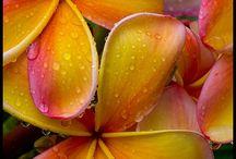 Flowers / by Tina Palmateer von Hein
