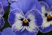 Flowers n Gardens / by Jodi Elleraas
