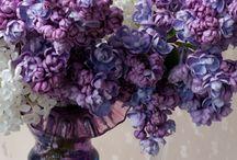 Flores Bonitas / by Monique McNeal