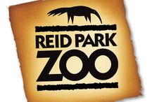 Visit the Zoo! / There's always something going on at Reid Park Zoo / by Reid Park Zoo