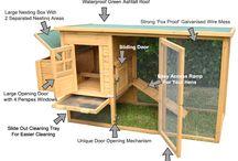 Bok bok BOK! / Backyard chickens / by Mandie Michniewicz