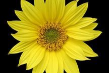 Sunny Day / by Patty Jones