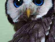 Owls / by Meg Mann