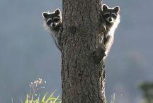 Wildlife / by Ellen Kinzer