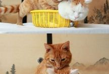 Kitties / by Heather Meiners