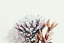 Naturally, / by Lea Freni