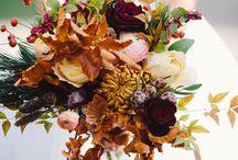 Seasonal: Fall / by Plum Sage Flowers