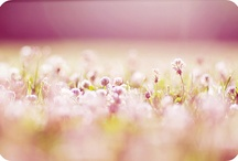Beautiful Bokeh / by Debbie-Anne Parent