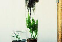 Plants,gardening,outside / by Desiree Jones
