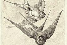the birds / by Rachel Fesperman