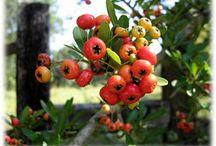 Plants I dislike / by Kathy Hogan Van Mullekom ...and friends:)