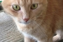 my cat blondie / by Roxanne Coughlin