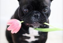 FRENCHIES! / by Michelle Miller