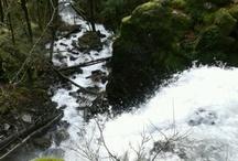 Nature Walks / by Oregon Jamboree
