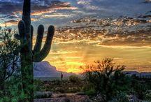 Arizona / by Emmaline Foster