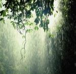 Drop of Rain and tears  / by Maria Veigman