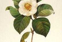 Vintage flower / by Beelove Crochet