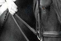 Horses* / by Imke Supra
